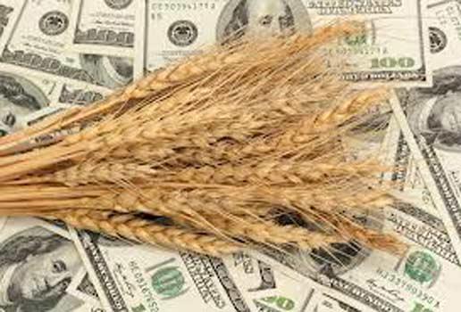 ГПУ обвиняет группу лиц в «зерновом сговоре» на 19 млн грн